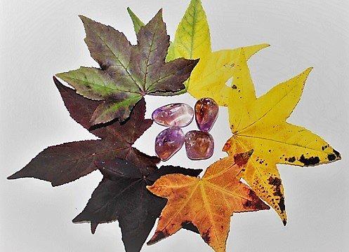 Meditação do Outono